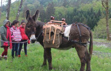 Baudet d'âne-Equitation bis Provinz Luxemburg
