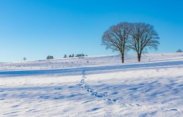 Pistes de ski des Maugires-Ski de fond bis Provinz Luxemburg
