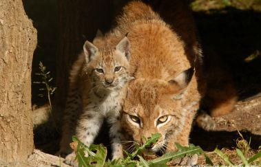 La Réserve d'Animaux Sauvages - Domaine des Grottes de Han-Parcs-animaliers bis Provinz Namur