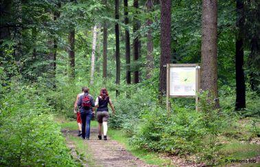 Clairière de So Bechefa-Parcours Vita bis Provinz Luxemburg